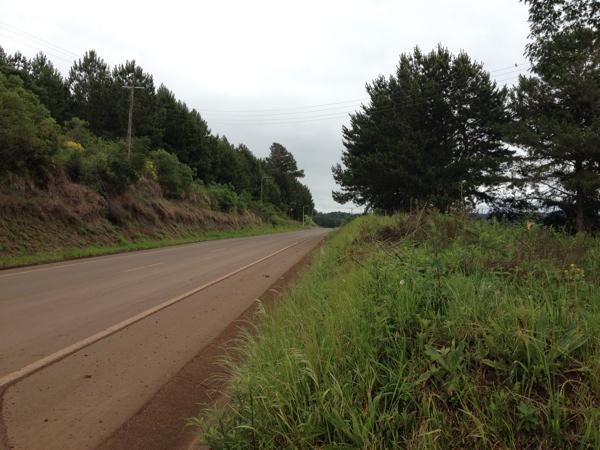 shitake-estrada