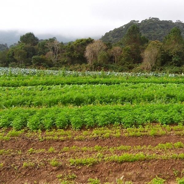 Associação Ecológica Recanto da Natureza, em Santo Amaro da Imperatriz, um dos parceiros do Plantepramim